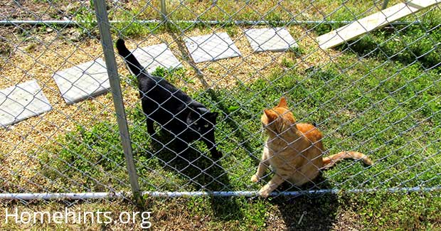 two cats inside an outdoor cat enclosure cage