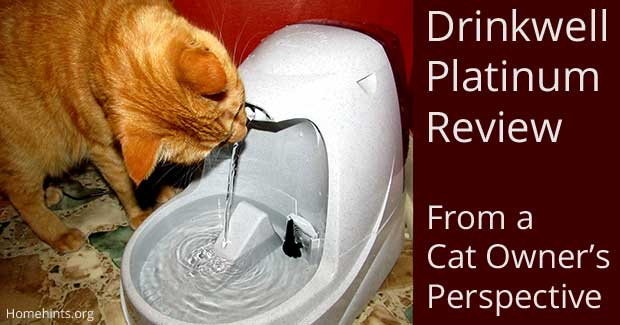 Drinkwell Platinum Water Fountain Review From a Cat Owner's Perspective