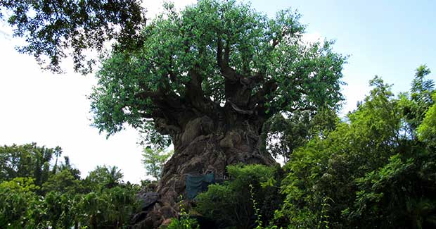 My Disney Experience: Animal Kingdom