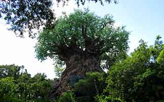 Tree of Life at Disney Animal Kingdom